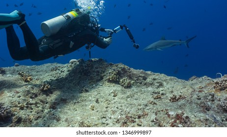 Underwater photographer, marine biologist and shark