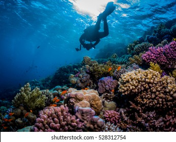 Underwater photographer over the coral reef. Southern Red Sea.
