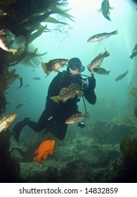 Underwater Photographer surrounded by fish looking into each others eyes in Catalina