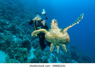 A underwater photographer taking photographs of a graceful hawksbill sea turtle gliding through the clear blue water