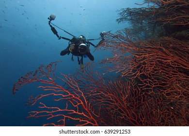 An underwater photographer taking a picture of deep water gorgonians with a large camera set up.  Taken at Turneffe Atoll Belize