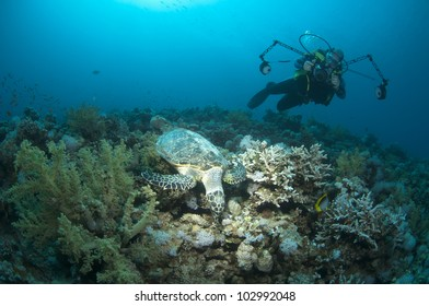 underwater photographer and turtle on coral reef