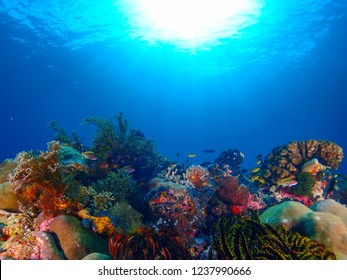 Underwater photography of beautiful coral reef at Raja Ampat, that known as a heart of the Coral Triangle.