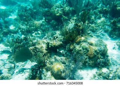 Underwater photography of the Caribbean Sea. Corals and fish.