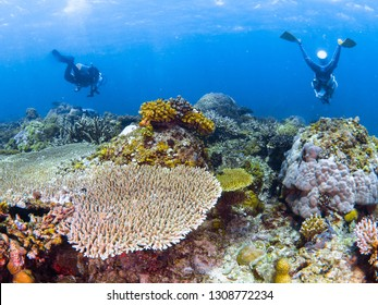 Underwater photography of coral reef and scuba divers on sallow at Coron Island, Philippines.