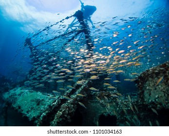underwater photography underworld photography scuba diving school of fish travel tropical ship wreck