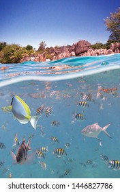 Underwater picture with surface and island and a lot of fishes in tropic sea