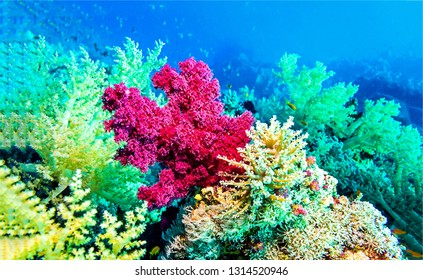 Underwater pink coral view. Pink coral underwater scene. Underwater pink coral view. Underwater pink coral close up