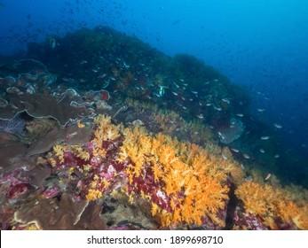 Underwater pinnacle fully covered with corals (Mergui archipelago, Myanmar)