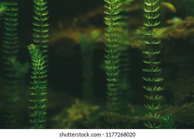 Underwater plants.abstract dark underwater plants wallpaper. Shallow focus.