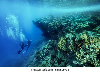 The Underwater of the Red Sea in Dahab,Egypt