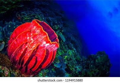 Underwater red sea sponge scene. Red sea sponge underwater. Underwater sea sponge view. Underwater world panorama