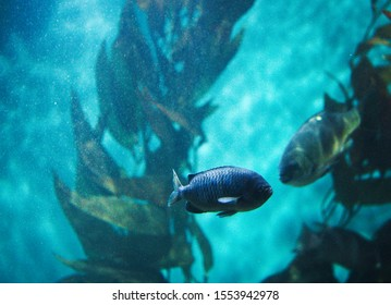 An underwater rendezvous between two fish