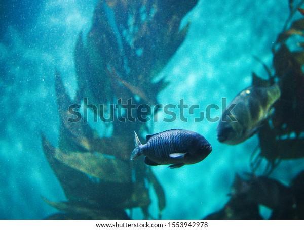 An underwater rendezvous between two fish