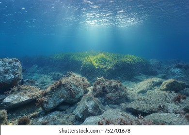 Underwater rocks and seagrass on the seabed with natural sunlight through water surface, Mediterranean sea, Costa Brava, Spain