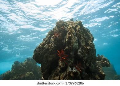 Underwater Rocky Coral Reef in Tropical Ocean