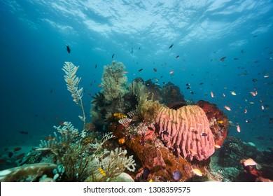underwater Sangalaki Island, East Borneo Indonesia Coral life, photo was taken 4/22/2016