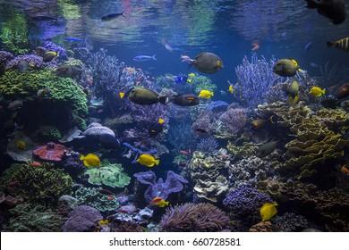 Underwater scene.