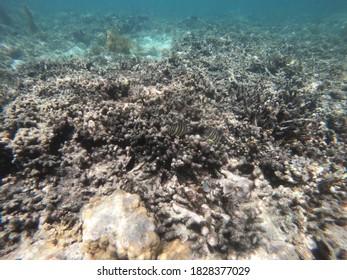 Underwater scene of belitung island indonesia