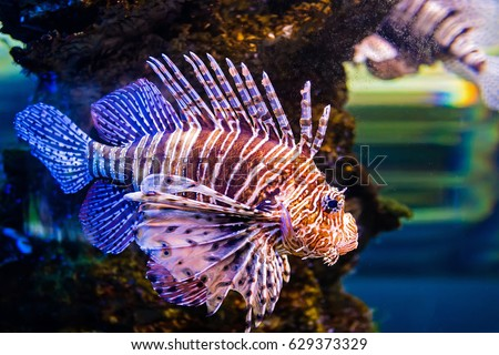 Striped fish images opinion