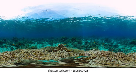 Underwater Scene Coral Reef 360VR. Tropical underwater sea fishes. Virtual tour 360. Panglao, Philippines.