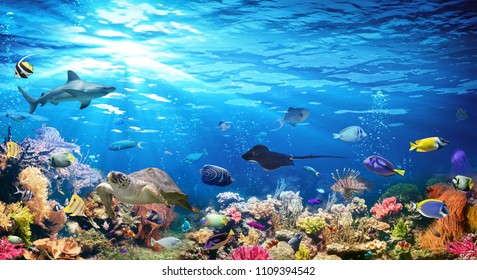 Underwater Scene With Coral Reef And Exotic Fishes  - Shutterstock ID 1109394542