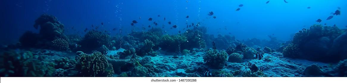 水中の風景/珊瑚礁/世界の海洋野生生物の風景