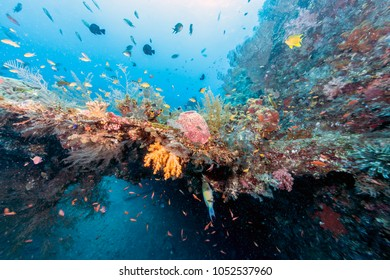 Underwater scene off the coast of Bali