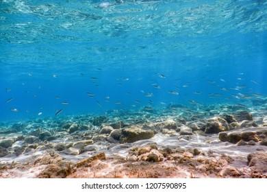Underwater Scene Sunlight, fish and water surface. Underwater Life.