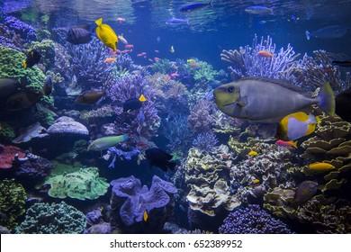 Underwater scene. Underwater world. Underwater life landscape.