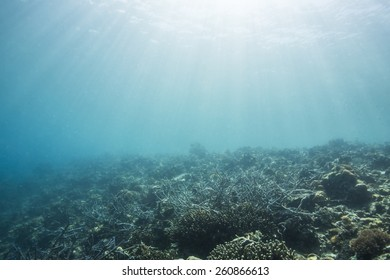 Underwater scenery. Diving at coral reef with a lot of small fish and sunrays through water surface.