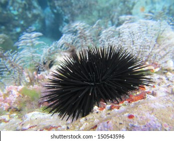 an underwater scenery with a sea urchin and marine vegetation