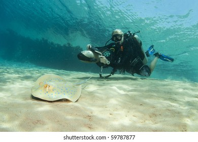 underwater scuba diver on DPV with blue spotted sting ray