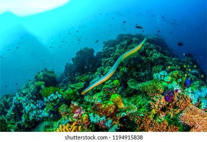 Underwater sea snake scene. Sea snake swim underwater scene. Underwater sea snake panorama. Underwater world view