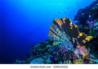 Underwater sea sponge landscape