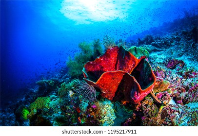 Underwater sea sponge landscape. Red sea sponge underwater scene. Underwater world panorama. Underwater scene view