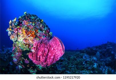 Underwater sea sponge landscape. Uderwater world scene. Underwater life panorama. Underwater coral scene