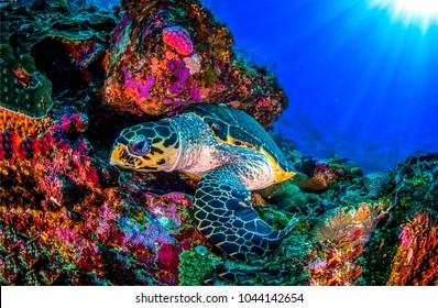 Underwater sea turtle landscape. Turtle underwater vew