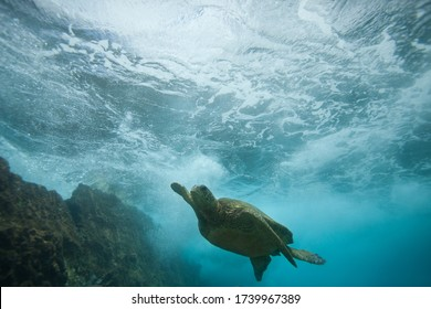 Underwater Sea Turtle Swimming over Coral Reef with a Wave Crashing Overhead