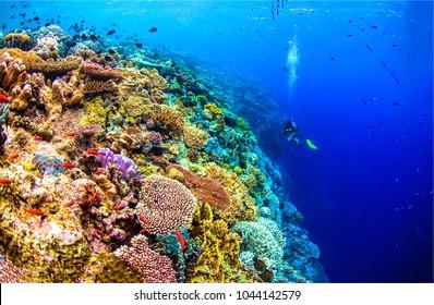 Underwater sea world landscape. Under water sea