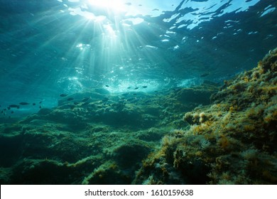 Underwater seascape in the Mediterranean sea, sunlight through water surface and rock with fish, natural scene, Catalonia, Costa Brava, Spain