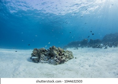 Underwater seascape seafan with natural sunlight through water surface and rocks on the seabed.underwater background