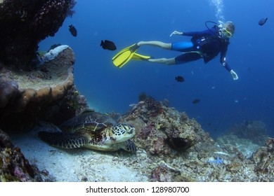 Underwater shoot of a diver watching a sea turtle (Chelonioidea)  on bottom
