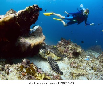 Underwater shoot of a diver watching a sea turtle ( Chelonioidea) having rest on a bottom