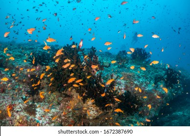Underwater shot of colorful tropical fish and beautiful coral reefs