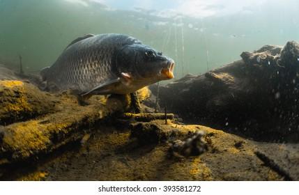 Underwater River Images, Stock Photos & Vectors | Shutterstock