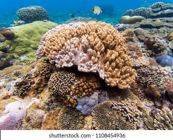 Underwater shot of hard coral reef in Penida island, Bali