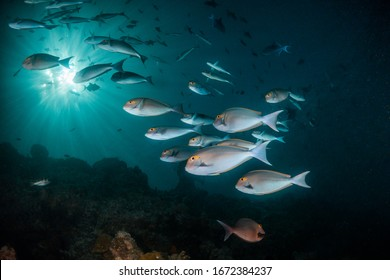 Underwater shot of schooling fish and colorful coral reef