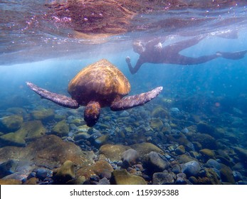 Underwater shot of snorkeling with Pacific Green Sea Turtle off the island of Isabela in the Galapagos Islands