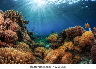 Underwater shot of a vivid coral reef with fishes